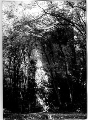 1979 Chřenovice 003